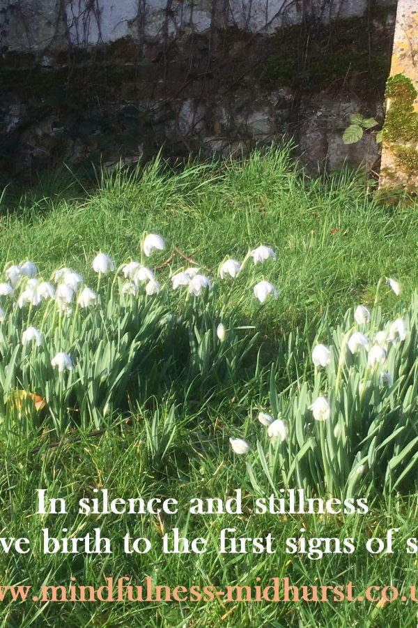 In silence and stillness nature is giving birth to the first signs of spring