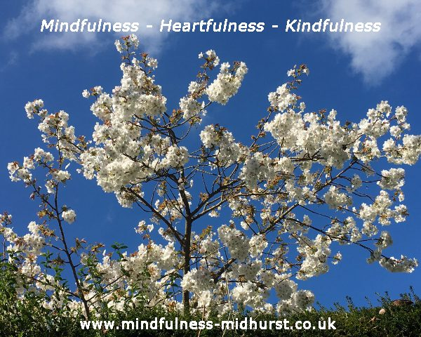 Mindfulness Summer News and Events